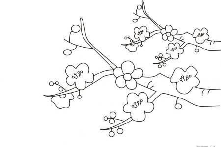 春天的梅花简笔画图片
