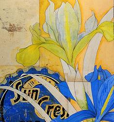 Michael Mew的复古花朵插画图片  作者:Michael Mew