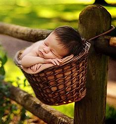 婴儿摄影的灵感之源  作者:翠西·雷佛