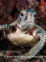 海龟自由自在