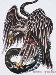 雄鹰捕蛇手稿图