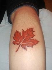 小腿上小清新植物纹身红色枫叶纹身图片