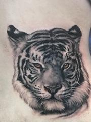 黑灰色的写实风格老虎纹身