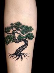 手臂郁郁青葱松树彩绘纹身图案
