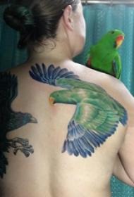 女生后背上彩绘渐变简单线条小动物鹦鹉纹身图片