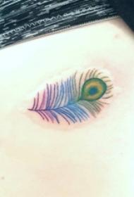 女生侧腰上彩绘渐变简单线条创意孔雀羽毛纹身图片