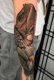 鳄鱼纹身男生手臂上霸气鳄鱼纹身图片