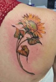 向日葵纹身图片 女生后背上彩色的向日葵纹身图片