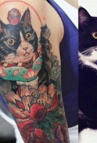 小猫咪纹身 女生手臂上小猫咪纹身图片