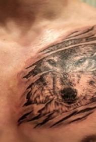 狼纹身 男生胸部狼纹身图片