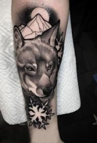 狼纹身 男生手臂上狼纹身动物图片