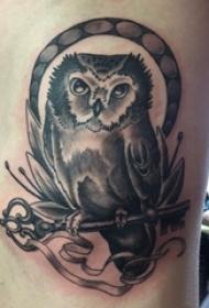 纹身猫头鹰 男生侧肋上猫头鹰纹身图片