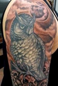 纹身猫头鹰 男生手臂上猫头鹰图腾