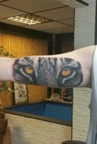 百乐动物纹身 男生手臂上彩色的老虎纹身图片