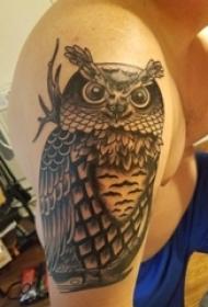 纹身猫头鹰 男生手臂上猫头鹰的图