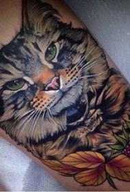 小猫咪纹身 男生小腿上猫纹身图片