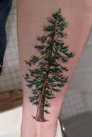 手臂纹身图片 男生手臂上彩色的大树纹身图片