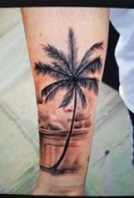 手臂纹身素材 男生手臂上彩色的椰树纹身图片