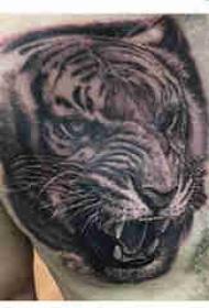 老虎图腾纹身 男生胸部老虎头纹身图案