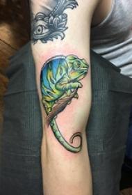 小动物纹身 男生手臂上树枝和变色龙纹身图片