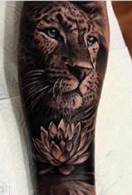 百乐动物纹身 男生小腿上莲花和狮子纹身图片