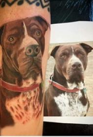 小狗纹身图片  男生手臂上彩绘的小狗纹身图片