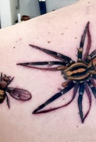 蜘蛛纹身 男生肩部蜜蜂和蜘蛛纹身图片