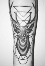 手臂纹身图片 女生手臂上几何和鹿纹身图片