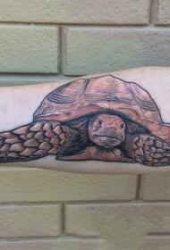 形象生动的龟纹身图案
