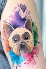 水彩卡通动物纹身--9张彩色?#30446;?#36890;水彩动物纹身图案作品