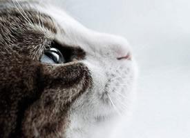 45度角仰望天空的伤感猫咪