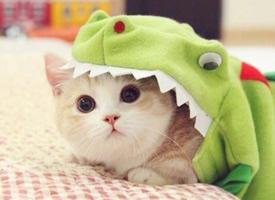 超萌大眼睛猫咪图片