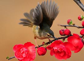 站在树枝上各种颜色的鸟儿