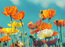 各式各样的花朵高清壁纸大全