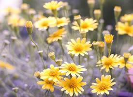 花晨月夕花堆锦簇的高清手机壁纸