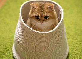 有点圆有点胖的猫咪图片