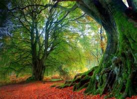 绿树成荫树木旺盛高大年夜宏伟的图片