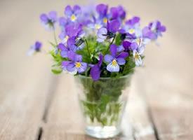 空间素材:色彩鲜丽的花朵背景