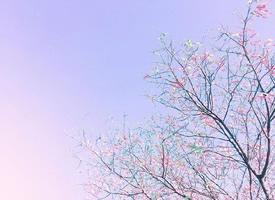 粉色天空的唯美壁纸大全