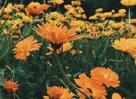 繁花簇锦百花争艳图片欣赏