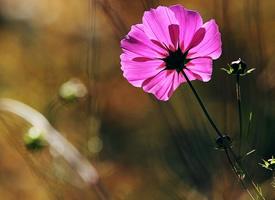 一套高清的美丽花朵壁纸欣赏