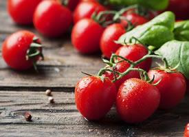 挂在藤上红彤彤的番茄图片