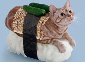 可爱的喵星人变成了寿司图片