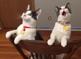 最萌不过天然呆的小猫图片