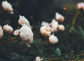 春天是个花的世界 美丽又不失奢华