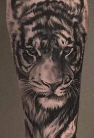 写实风格的一组森林之王黑灰老虎纹身图案