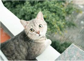 猫咪趴在阳台上好唯美图片欣赏