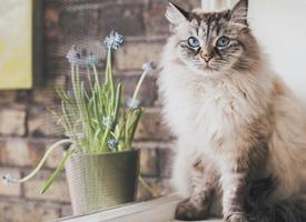 一只眼睛里有大海星辰的小猫咪