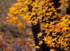 秋天如歌,落叶一点点地走完自己的旅程