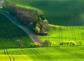 大自然風光高清綠色護眼壁紙